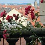 Rose Garden at the New Residenz・・・薔薇越に見る旧市街