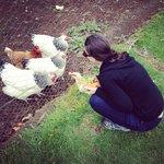 Feeding the chooks