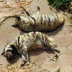 A pair of hyenas resting in Haifa Zoo