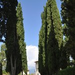 The cyprus lined driveway leading to Villa Campestri