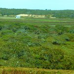 the view of the bog from the road, using a zoom lens