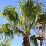 Gaslights and Palms