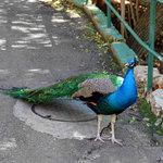 Birds in Haifa Zoo