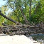 fallen trees along the creek