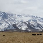 The Andes and Wild Horses