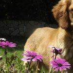 mascota y flores