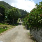 NARROW ROAD UP TO DEVON RESIDENCE