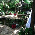 Tropical Garden and Koi Pond
