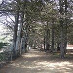 Bosque beirando a costa onde é possível caminhar
