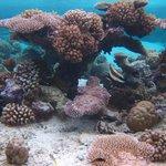 Coral Garden, Bora Bora