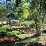 Addo Backpackers - vegetable garden
