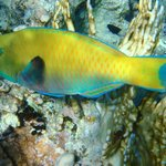 beautiful multicoloured fish while snorkelling from beach