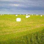 エサヌカ線から牧草ロール