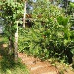Landscapes of edible plants