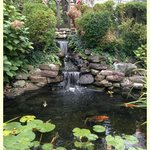 Koi Pond out front