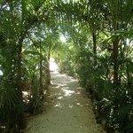 Beautiful Jungle lines walkway near entrance
