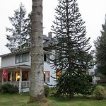 That's a large Monkey Puzzle Tree!