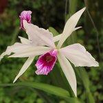 A beleza das orquídeas