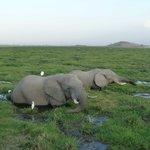 Elephants devant la colline