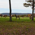 Elk October 10-13