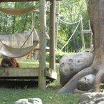 orangutan exhibit