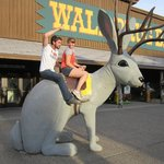 Riding the jacalope