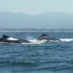 Biiig whale