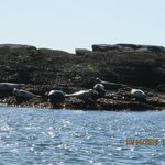Harbor seals!