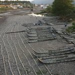 九曲溪用的竹排