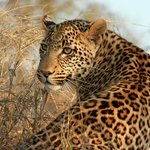 Cub of the Vomba female