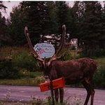 Caribou - sign