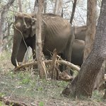 Elephant Herd @ Bandipur on the way to Resort
