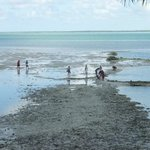 Local villagers looking for crabs at low tide