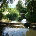 Flowing brook at Worcester College