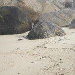 Вот такие камушки могут лежать на пляже