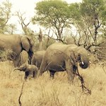 Elephants joining us on Game Drive
