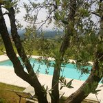 Pool and olive tree