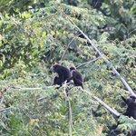 живность, снято на территории гестхауса, обезьяны приходят в 5-6 утра большой семьей