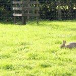 wild bunnies at Hill Top Farm