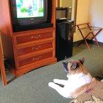 not a flat panel TV