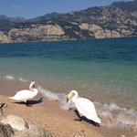 Swans are eating from your hand in front of the hotel