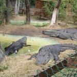 Alligaator Alley