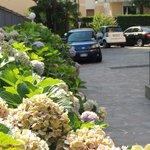 Estacionamento florido