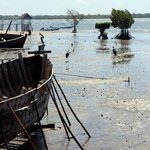 mangroves, marabus and boats