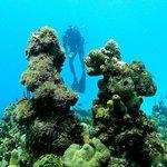 Scuba Diving in Catalina Island Dominican Republic