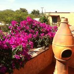 Bougainvillia blooming on the rooftop veranda