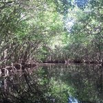 Mangrove trees in the 10,000 Islands