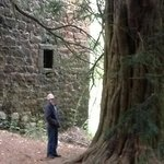 an ancient yew tree below the castle,  and a wonderful new friend..