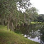 Mossy trees and pont at Charles Towne Landing