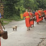 Right outside the hotel, monks walking by for morning alms